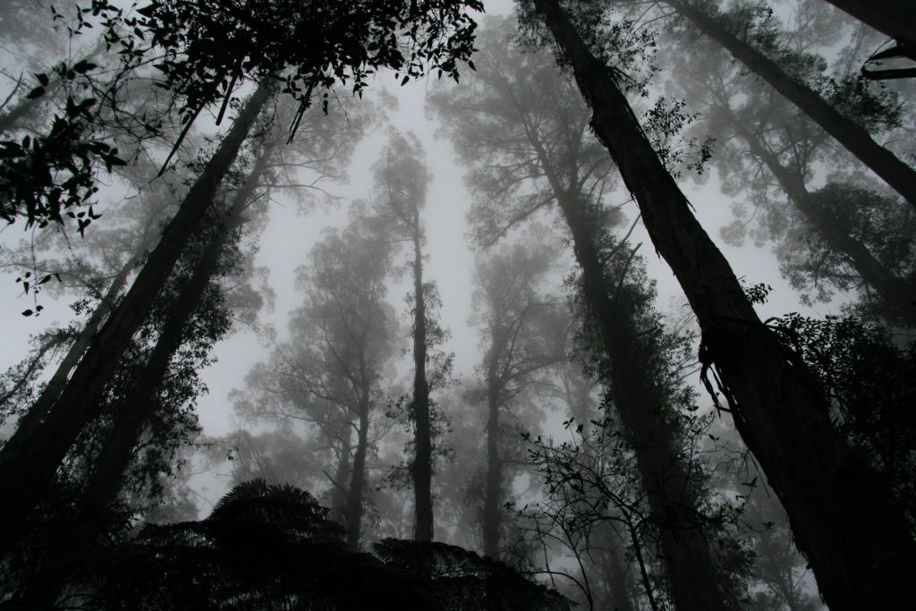 black-and-white spooky forest